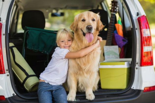 perro-viajando-andina